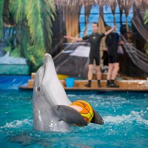 Дельфинарии, океанариумы Пятигорска