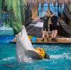 Дельфинарии, океанариумы в Пятигорске