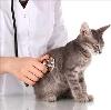 Ветеринарные клиники в Пятигорске